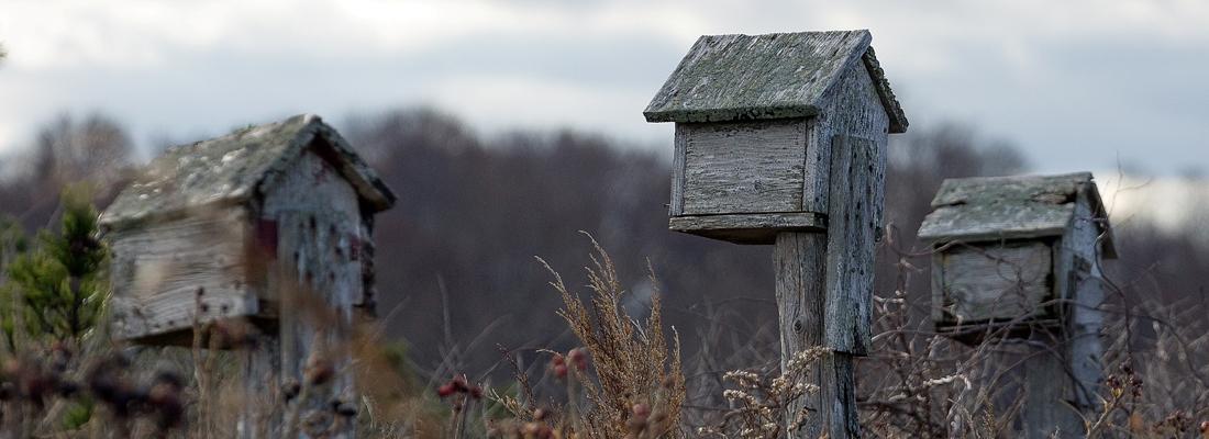 Plymouth birdhouses